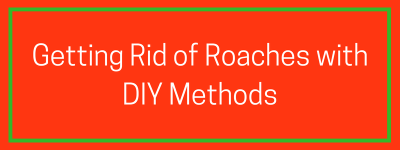 Eliminating Roaches with DIY Methods