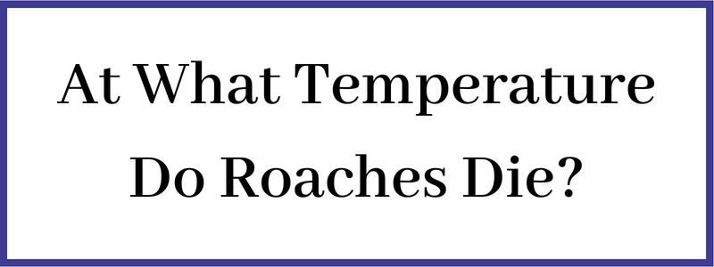 At what temperature cockroaches die