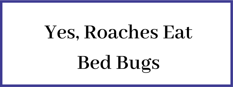 House Roaches Eat Bed bugs