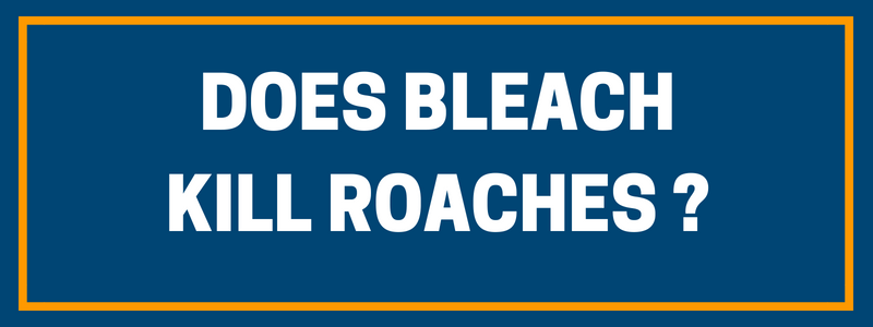 Bleach and roaches