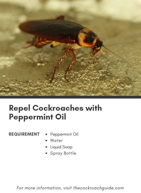 Peppermint oil and cockroaches