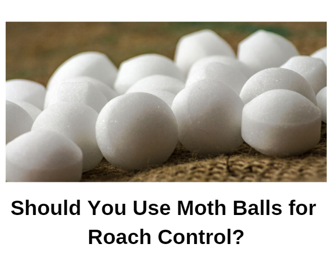 Mothballs and Roaches