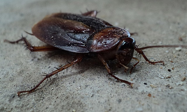 diatomaceous earth to kill roaches