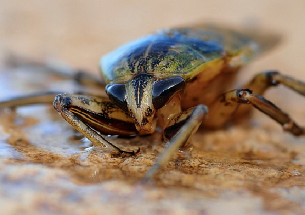 head of a cockroach