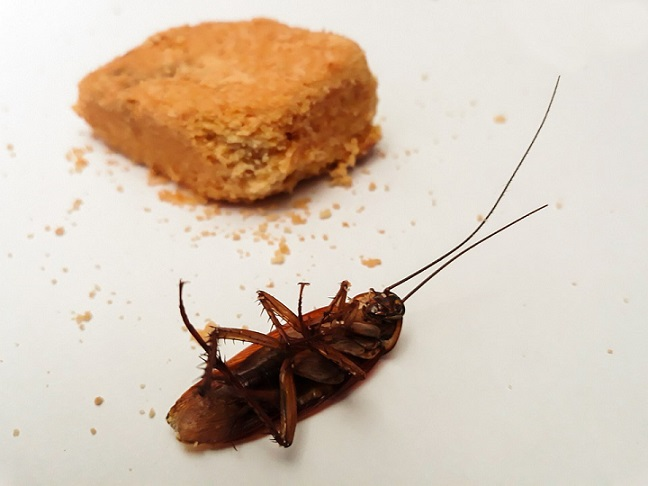 baits to eliminate roaches