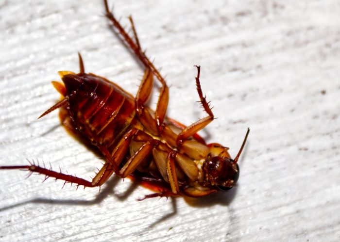 eliminate roaches with foggers