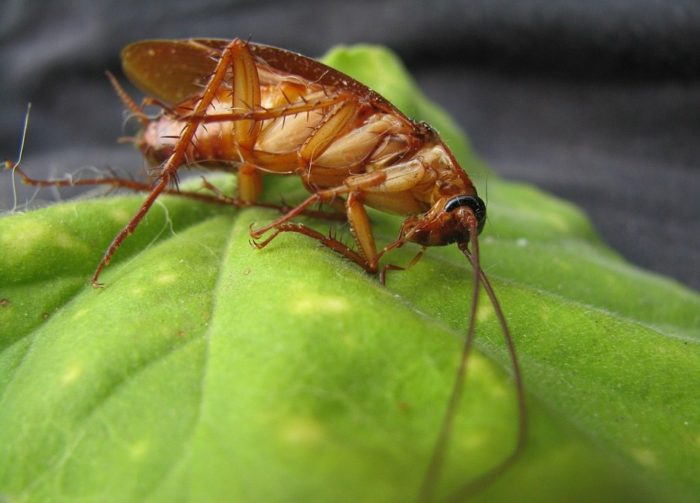 eliminate roaches with foggers & gels