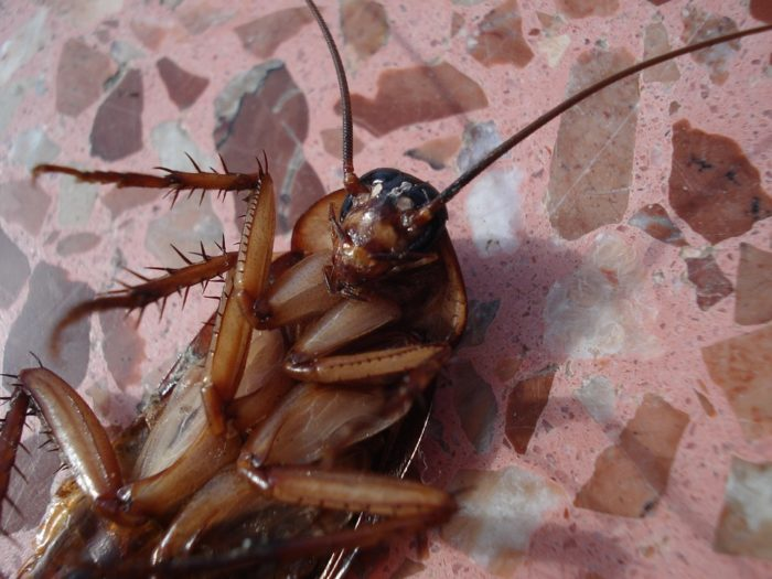 can roaches see in dark
