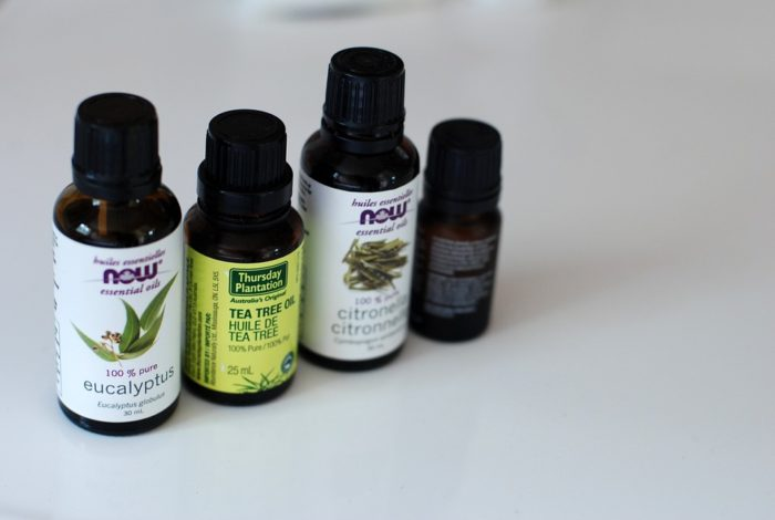 tea tree oil to get rid of baby roaches